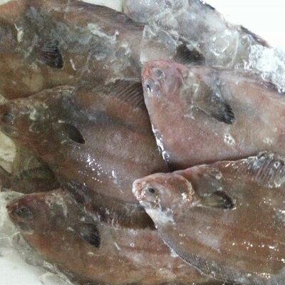 鮮魚を急速冷凍北海道噴火湾ナメタカレイ3kg(約10-15枚入)送料無料※沖縄は送料別途加算なめたカレイなめたかれい