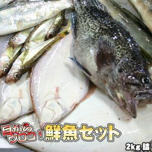 鮮魚セット 2kg 業務用 居酒屋 送料無料 北海道産 ※沖縄送料別途加算
