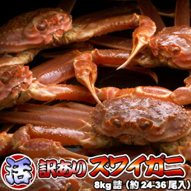 活ズワイガニ 訳あり 8kg 身入り7分前後 送料無料 ※沖縄送料別途加算 ずわいがに ずわい蟹