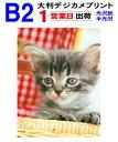 【B2サイズ】大判デジカメプリント1営業日目出荷【化粧断裁を含みます】税別8,000円以上で送料無料
