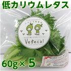 低カリウムレタス5袋セットDr.ミールオリジナル野菜