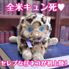 プレゼントにぴったりのL.A.生まれのセレブな仔ネコ、Hannah'sKittens(ハンナズ・キトゥン)