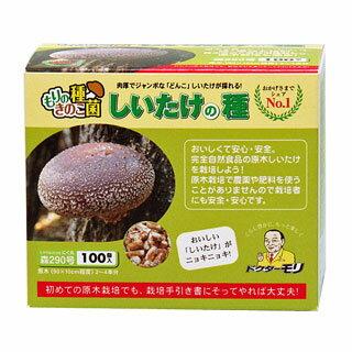 シイタケ種駒【しいたけ種駒100個】 [しいたけ菌/椎茸菌/しいたけ栽培/シイタケ栽培/椎茸栽培] 日本で一番売れてます!