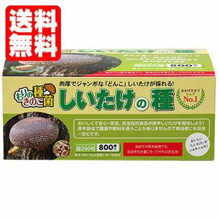 【送料無料】シイタケ種駒【しいたけ種駒800個】 [しいたけ菌/椎茸菌/しいたけ栽培/シイタケ栽培/椎茸栽培] 日本で一番売れてます!