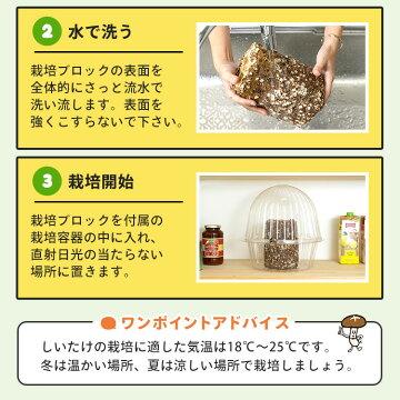 栽培方法2
