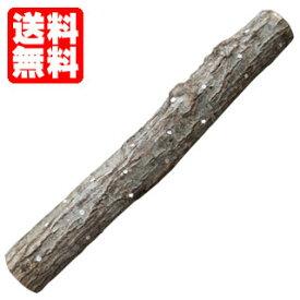 しいたけ菌打込み原木 原木しいたけ栽培キット | シイタケ栽培 しいたけ栽培 椎茸栽培 原木シイタケ 原木しいたけ 原木椎茸 送料無料