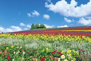 富良野を彩る花の丘(北海道) ジグソーパズル 風景 1000ピース 50×75cm 10-1344