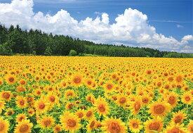 美瑛のひまわり畑 北海道 ジグソーパズル 日本の風景 300ピース 26×38cm 03-872 やのまん