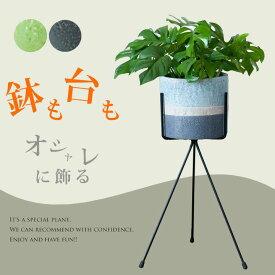 完売御礼!お届けは7/15〜姫モンステラと陶器の鉢カバー。アイアンスタンドのSET(今月の植物)