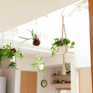 【送料無料】マクラメポトス/グローバルグリーン・鉢・マクラメの3点セット(今月の植物)