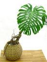 【送料無料】超可愛い8号鉢向け藤カゴ(バスケット 鉢 カバー 8210 sm)※植物は使用例です。商品には含まれません。