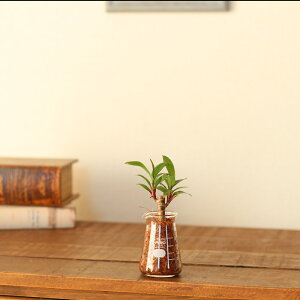 【おしゃれな植木鉢】置くだけで可愛い!インテリアとしても、鉢としても遊んで見たくなる♪高品質!国産のやわらかいフォルムに癒しをもらう、コニカルビーカー50ml(ガラス製:最小外