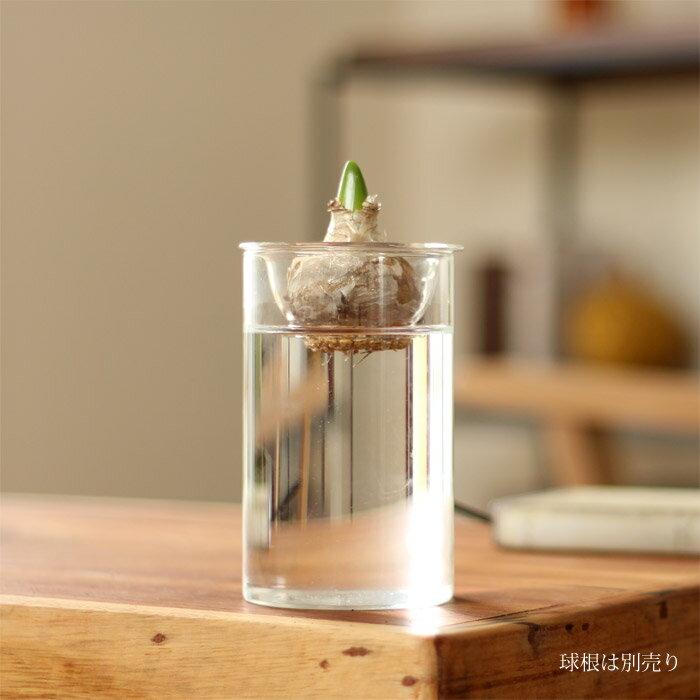 アレンジ自由!1年中使える!球根やサボテンを水栽培で育てたり、切り花や、雑貨を詰めたり。何かと使えるガラス花瓶 Sサイズ【ヒアシンス フラワーベース】
