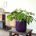 簡単♪ 1鉢でお部屋がお洒落になる!名人、杉山さんの姫モンステラと植木鉢にしては斬新なカラー、ワイルド鉢カバーのSET