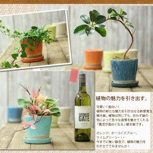 【植木鉢】貫入加工・ポップ&JUNK風カラー陶器鉢Mサイズ【植木鉢3号〜3.5号ポット向けおしゃれ】