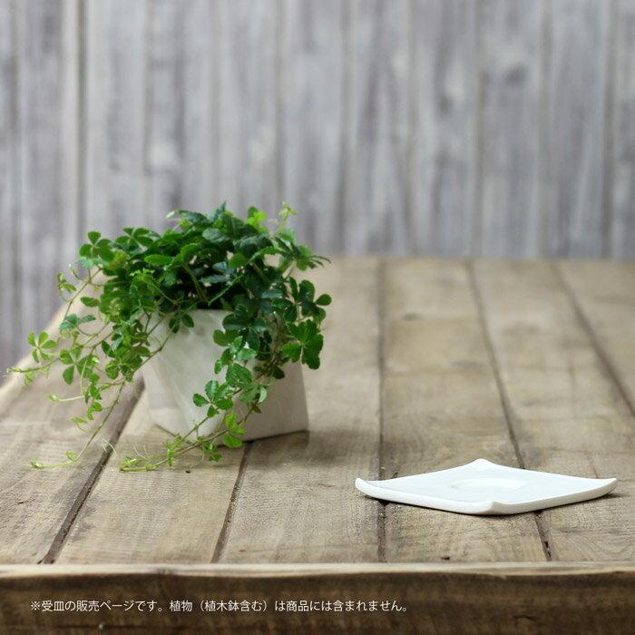 多面体鉢にあうように選んだ、陶器の受皿※受皿です。商品に植木鉢は含まれません。