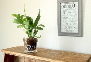 新しい!これ、イイかも♪今までの植物が、より魅力的に☆キュートなカタチ。ガラスポット【植木鉢排水穴あり3〜3.5号サイズの植物向け】