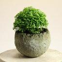 流木チップを混ぜることで風合いを高めました。和モダン植木鉢・球型S 高さ6cm※植物は商品には含まれません