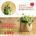 ●お届けは10/20〜【広告の品につき、送料無料】観葉植物 アイビーの寄せ植えを風合い良い、麻袋に入れて※葉色はお任…