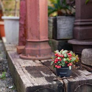 チョコン♪洗面台や、トイレの窓辺にもキュートフラスコでサボテンを楽しむSTYLE【フラスコと水耕用サボテンのセットです】