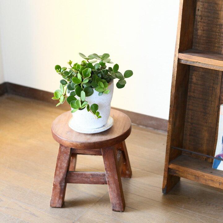 【送料無料】ペペロミア・ホープマシュマロみたいな植木鉢。