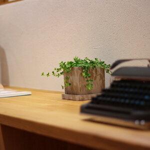 プニプニ、可愛いペペロミア・イザベルを送料無料にて。in石っぽい質感が素敵なスクエア陶器鉢。【観葉植物インテリア多肉植物大型】