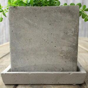 ●完売御礼!次回お届けは11/6〜プニプニ、可愛いペペロミア・イザベルを送料無料にて。in石っぽい質感が素敵なスクエア陶器鉢。【観葉植物インテリア多肉植物大型】