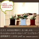 【送料無料】観葉植物 ホヤ・カルノーサ