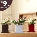 【おしゃれな植木鉢】定番スタイル・スクエア陶器(9cm)