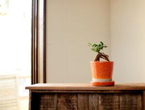 【植木鉢】JUNK風おしゃれツートンカラーの陶器鉢M