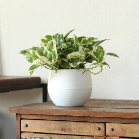 育てやすく飾りやすい観葉植物 ポトスエンジョイ丸〜い植木鉢M