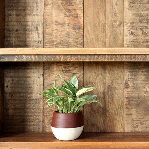 観葉植物ポトス/ボール鉢