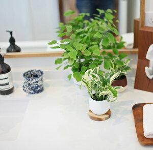 半年ぶりの入荷!6/25〜のお届けポトス・人気品種セレクションin小さなボールPOT×1つ※※鉢の色はお任せです。(観葉植物)