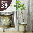ブリキは陶器に比べ、お値打ちなんです!このサイズはあまりないですよ!アンティーク風ブリキ鉢※植物は商品には含ま…