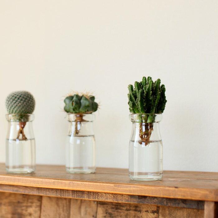 サボテンを小さな瓶で、水耕栽培×1