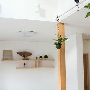 吊るす観葉植物