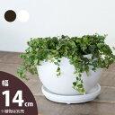 ボール型・陶器鉢(14cm)