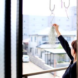 完売御礼!お届けは6/20〜大好き!銀葉が美しい〜、ウスネオイデス(スパニッシュモス)実は「飾る」より、「育てる」方が楽しい植物なんですよ!【観葉植物 吊り下げ】