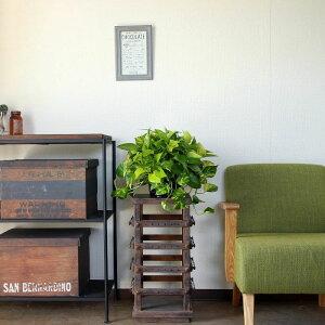 楽天スーパーSALEメガネみたいな葉がお茶目☆ベンジャミン・バロッグ5号鉢。送料無料です!