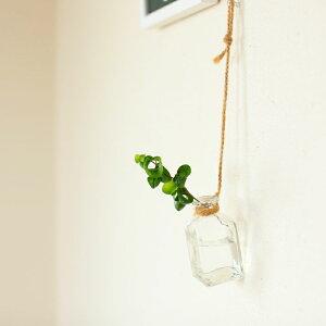 観葉植物バロック