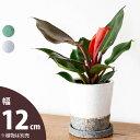 【おしゃれな植木鉢】石のザラッとした質感のツートン陶器鉢(12cm)