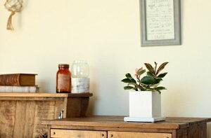 ●お待たせしました!予約開始11/7〜のお届け【e-花屋さん5周年特別企画観葉植物】今が旬のホヤ・カルノーサを送料無料にて。
