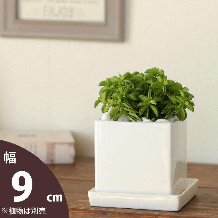 可愛いキューブ型。スクエア陶器鉢(9cm)【おしゃれ 566】