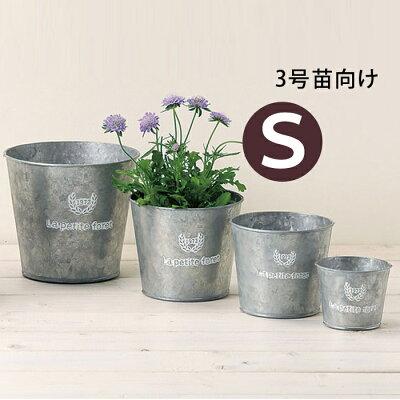 鉢がシャープなスタイリッシュ☆モダンパルテノシッサス・シュガーバイン【お届けは11日〜】/植木鉢