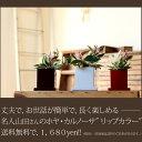 ●完売御礼!お届けは5/26〜【送料無料】観葉植物 ホヤ・カルノーサ 育てやすい インテリア