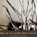【送料無料 希少品】あー、この質感たまらない。砂漠に生える珊瑚の様なユーフォルビアプラティカーダ( プラティクラダ)【別名:ゾンビプラント 多肉植物】