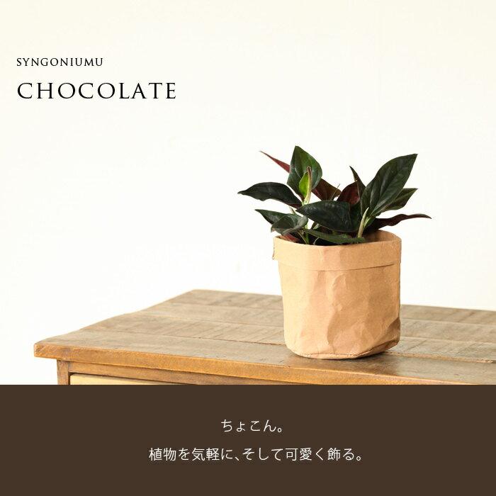 """カッコいい観葉植物シンゴニウム・""""チョコレート""""を、レザーの様な風合いのペーパーバッグに入れて。"""