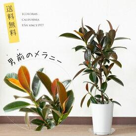 【送料無料】メラニーゴム6号サイズ※植物との同梱は出来ない商品です