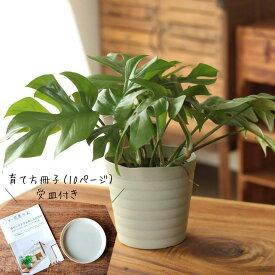 観葉植物 今月のおすすめ!杉山さんの姫モンステラ10ページからなる育て方ガイド&受皿付き!【お届けは8/6〜】