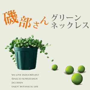 インテリア/観葉植物